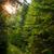 pin · arbres · soleil · brillant · bleu · star - photo stock © master1305