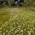 области · луговой · весны · белый · Ромашки - Сток-фото © master1305