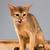 котенка · мало · ребенка · природы · кошки - Сток-фото © master1305