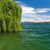the green tree on a lake garda with mountains as background stock photo © master1305