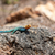 colorido · verde · lagarto · natureza · beleza - foto stock © master1305