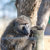 baboon stock photo © master1305