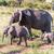 elefánt · család · sétál · szavanna · afrikai · elefánt · utazás - stock fotó © master1305