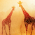 decorativo · girafa · cabeça · étnico · ornamento · cara - foto stock © maximmmmum
