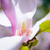 close up of beautiful pink magnolia flower spring floral background stock photo © maxpro