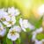 gruszka · kwiat · makro · widoku · białe · kwiaty · drzewo - zdjęcia stock © maxpro