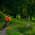 Cyclist Riding the Bike in the Beautiful Summer Forest stock photo © maxpro