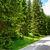 free road among beautiful forest in the national park durmitor montenegro stock photo © maxpro