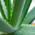 капсула · травяной · изолированный · белый · текстуры - Сток-фото © maxpro