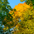 colorful autumn leafs on the tree over deep blue sky stock photo © maxpro
