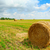 harvested field with round straw bales stock photo © maxpro