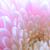 изображение · красивой · розовый · цветок · цветочный - Сток-фото © maxpro
