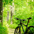 Mountain Bike on the Trail in the Forest stock photo © maxpro