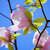 beautiful pink magnolia flowers on blue sky background spring floral image stock photo © maxpro