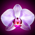 beautiful pink orchid flower on violet background stock photo © maxpro