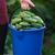 uborkák · szőlőszüret · tiszta · mezőgazdaság · helyi · szelektív · fókusz - stock fotó © maxsol7