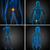 3D · renderelt · kép · orvosi · illusztráció · hólyag - stock fotó © maya2008