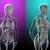 3D · medici · illustrazione · stomaco - foto d'archivio © maya2008