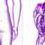 3D · renderelt · kép · orvosi · illusztráció · emberi · vese - stock fotó © maya2008