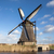 thickets of a cane on the background of the dutch wind mill stock photo © mcherevan