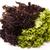 zöld · friss · köteg · saláta · fehér · legjobb - stock fotó © mcherevan