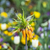 exotisch · oranje · bloesem · bloem · botanisch · tuinen - stockfoto © meinzahn