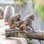 dois · comprometido · mútuo · família · natureza · animal - foto stock © meinzahn