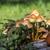 gombák · öreg · erdő · növény · esernyő · gyógynövények - stock fotó © meinzahn