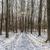 drogowego · piękna · zamrożone · lasu · zimą · drzewo - zdjęcia stock © meinzahn