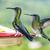 madár · színes · Brazília · fa · természet · zöld - stock fotó © meinzahn