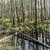 híres · mocsár · park · fa · erdő · fák - stock fotó © meinzahn
