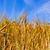 çiftlik · görüntü · kuzey · Almanya · Bina - stok fotoğraf © meinzahn