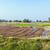 fresh plowed fields in india stock photo © meinzahn