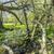 romantica · foresta · natura · parco · nubi · erba - foto d'archivio © meinzahn