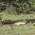 aslan · aile · park · Afrika · grup · hayvan - stok fotoğraf © meinzahn