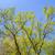 葉 · ツリー · 集中的な · 光 · 午前 · 水 - ストックフォト © meinzahn