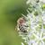 fiore · fiorire · primo · piano · perenne · macro · viola - foto d'archivio © meinzahn