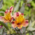 laranja · lírio · flor · crescente · ao · ar · livre - foto stock © meinzahn
