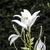 белый · Лилия · черно · белые · черный · цветок · красоту - Сток-фото © meinzahn