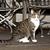 kedi · yavrusu · yeme · çim · kedi · ev · yeşil - stok fotoğraf © meinzahn