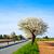 virágzó · gyümölcs · fák · tavasz · park · tájkép - stock fotó © meinzahn