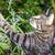 fiatal · kiscica · vadászat · zöld · fű · fű · szabadtér - stock fotó © meinzahn