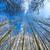 carvalho · folhas · campo · nuvens · grama - foto stock © meinzahn