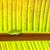 béka · növény · levelibéka · ki · közelkép · fókusz - stock fotó © meinzahn