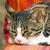 любопытный · серебро · кошки · вид · сбоку · ребенка · глядя - Сток-фото © meinzahn