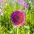 printemps · magnifique · tous · très · tôt · naturelles · vert - photo stock © meinzahn