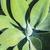 листьев · зеленый · agave · завода · небе · цветок - Сток-фото © meinzahn