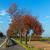 voetganger · fiets · teken · witte · verkeersborden · geschilderd - stockfoto © meinzahn