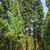 noto · grande · sequoia · alberi · piedi · parco - foto d'archivio © meinzahn