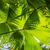 aislado · hojas · palmera · árbol · forestales · hoja - foto stock © meinzahn